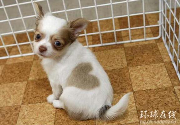 File:Japan-cute-puppy-01.jpg