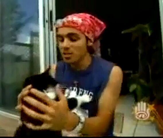 File:Adamo's cat.jpg