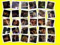 Thumbnail for version as of 18:25, November 2, 2010