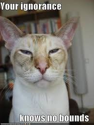 File:Funny cat.jpg