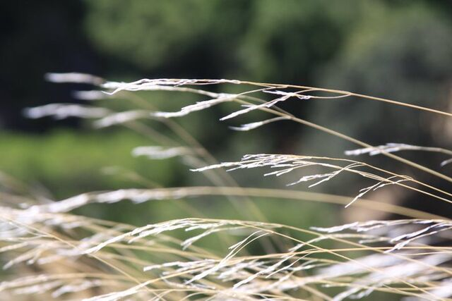 File:Grass1.jpg