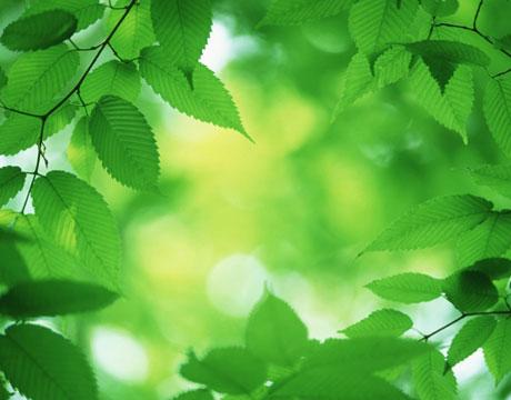 File:Green-tips-gifts-lg.jpg