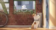 The Secret life of Pets 02