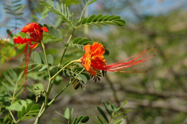 Datei:Blüten.jpg