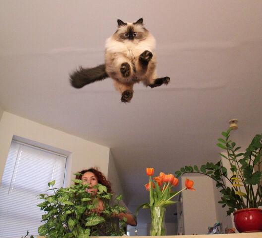 Datei:Katze-etwas-mehr-elan-bitte.jpg