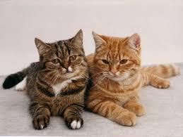 Datei:Katze .jpeg