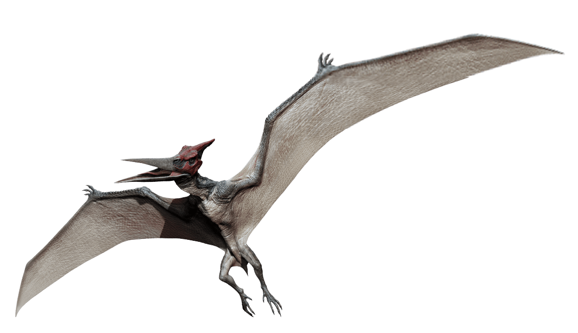 pteranodon dinosaur wiki fandom powered by wikia