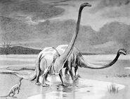 Diplodocus Woodward 1905