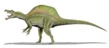 Spinosaurus BW