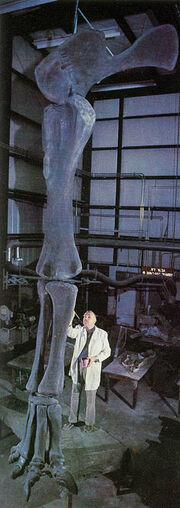 Ultrasaurus-d1