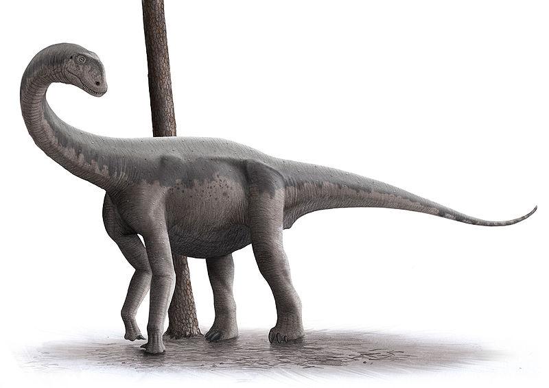Jobaria | Dinosaur Wiki | Fandom powered by Wikia