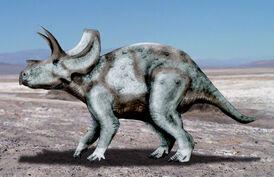 Ojoceratops NT