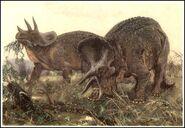 32 prean burian triceratops