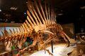 Spinosaurus hip