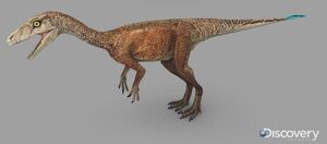 Eoraptor female