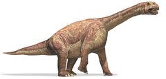 Camarasaurus sauropod.jpg