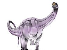 Austrosaurus
