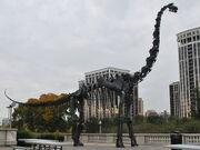 Brachiosaurus skeleton3