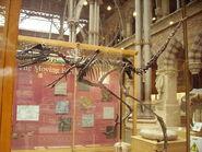 Bambiraptor 3