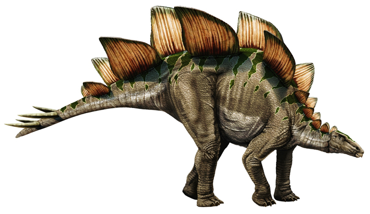 Stegosaurus/Gallery | Dinopedia | FANDOM powered by Wikia