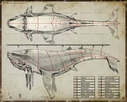 Whale sections