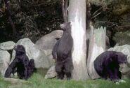 Imagineering-Disney Natures-Wonderland bears-2