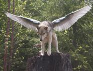 Winged Wolf