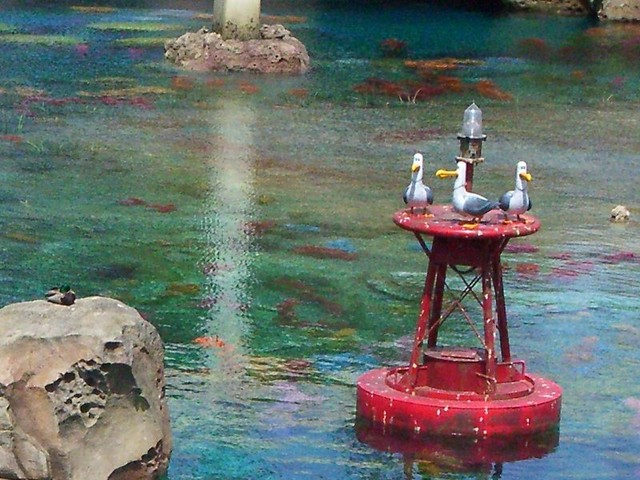 File:Seagulls Disneyland.jpg