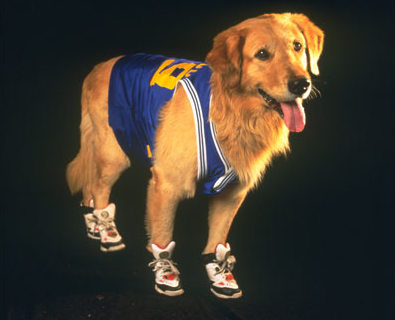 Air Bud (dog) | Disney Wiki | Fandom powered by Wikia