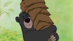 Baloo Scratching Front