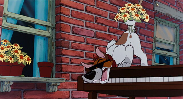File:Dodger on a piano in Why Should I Worry.jpg