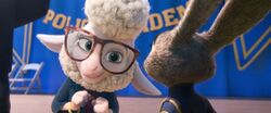 Bellwether congratulating Judy