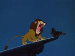 Lambert Lion 12