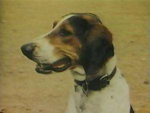 1957-hound-02