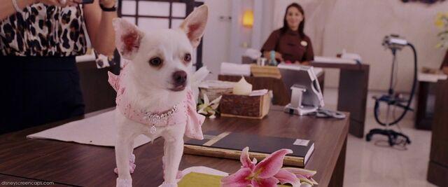 File:1000px-Chihuahua-disneyscreencaps com-51.jpg