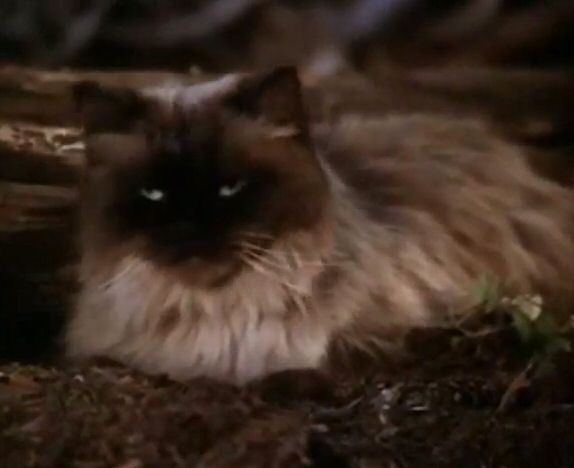 Cats Name From Homeward Bound