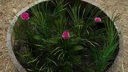 Flowers Nimue