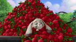 Clover's radishes