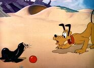 Plutos playmate 5large