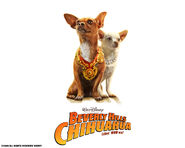 Papi-Chloe-wallpaper-beverly-hills-chihuahua-movie-9050772-1280-1024