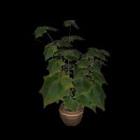 Ob plantmag 03