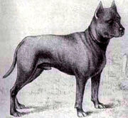 Blue-paul-terrier2