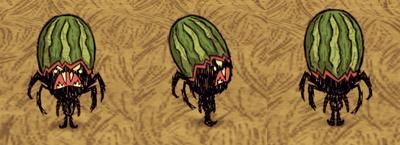 Fashion Melon Webber