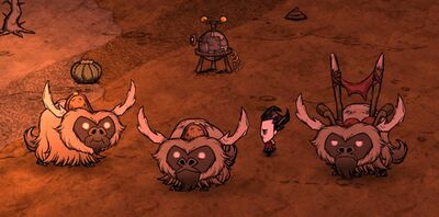 Beefalo Tendencies
