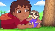 Sleepy sloth gets a ride to circus