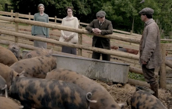 File:Pigs-on-downton1.jpg