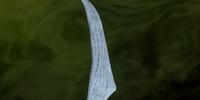 Savage Thorn