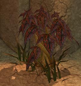 Spindleweed (screenshot)