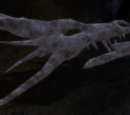 The Lost Dragon Bones