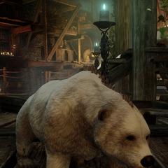 Chauncey the miniature bear
